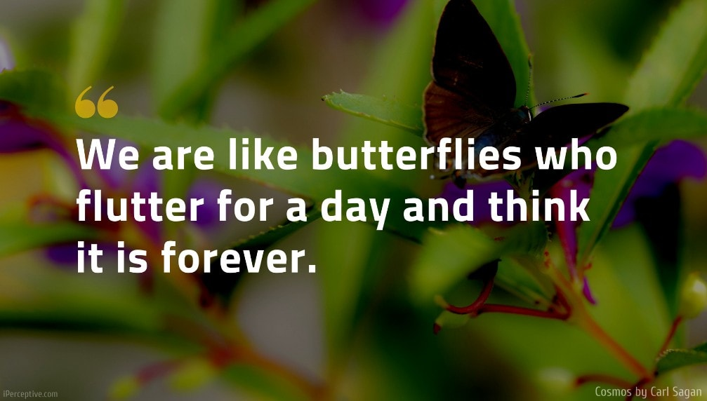 Carl Sagan Quote: We are like butterflies who flutter for a day and think it is forever.