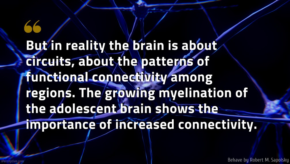 Robert M. Sapolsky Quote: But in reality the brain is about circuits, about the patterns of functional connectivity among regions. The growing myelination of the adolescent brain shows the importance of increased connectivity.