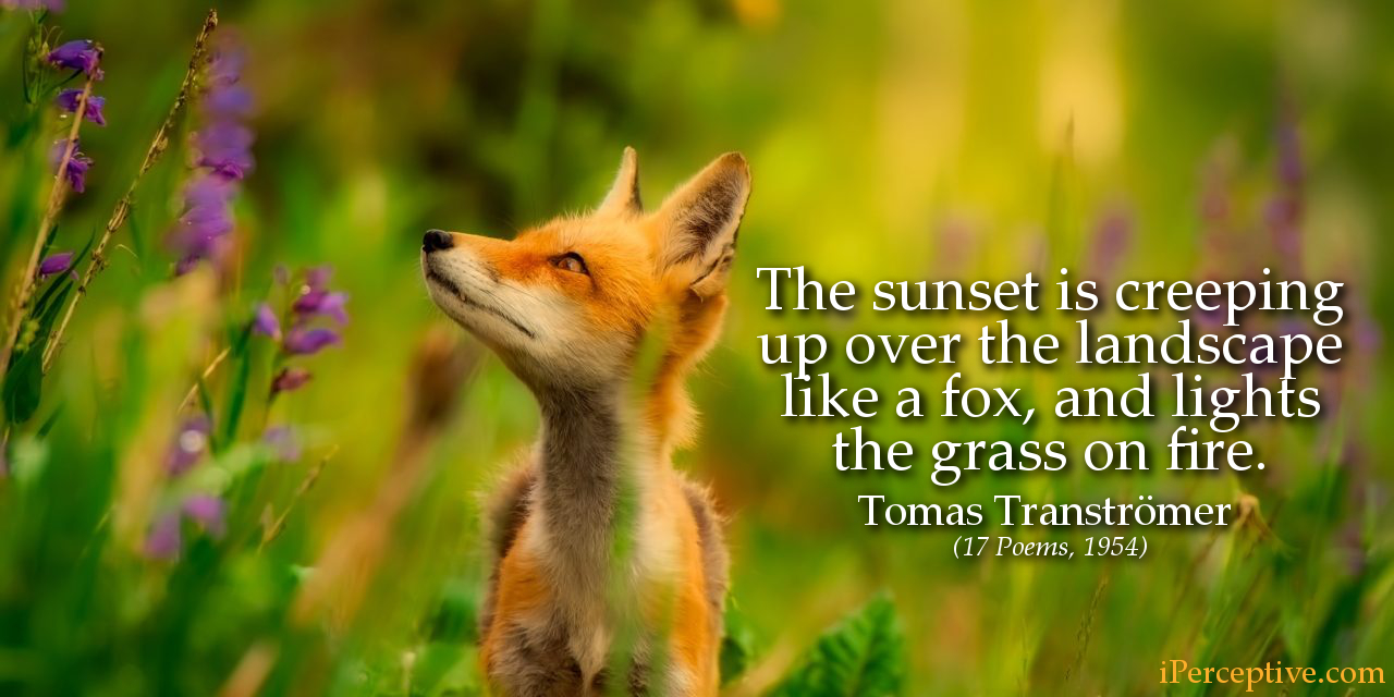 Tomas Tranströmer Quote (17 Poems): The sunset is creeping up over the landscape like a fox...