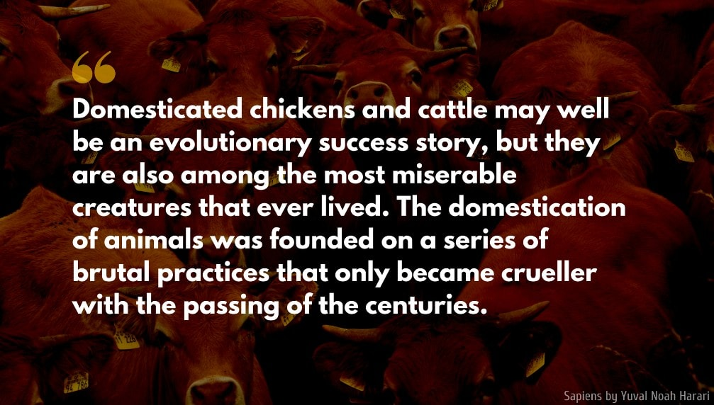 Yuval Noah Harari Quote: Domesticated chickens and cattle may well be an evolutionary success story, but they are also among the most miserable creatures that ever lived. The domestication of animals was founded on a series of brutal practices that only became crueller with the passing of the centuries.